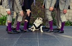 Adorable Pets: grooms' socks, modern , purple, dogs, sparkly, Groomsmen, bridal, day, dresses, groom, grooms, party, photography, pictures, wedding, Laguna Beach, California