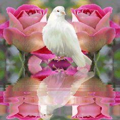Image du Blog wdsimages.centerblog.net