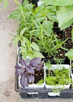 Helpful Guide! How to Plant a Successful Container Garden.