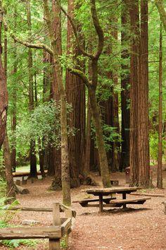 San Mateo Memorial Park: http://www.co.sanmateo.ca.us/portal/site/parks/menuitem