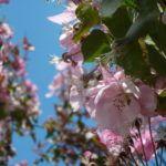AMOUAGE+Blossom+Love:+Recenze