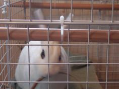 1000 images about must remember on pinterest bunny for How to make a rabbit hutch from scratch
