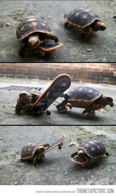 Just some tortoises skateboarding... nbd.