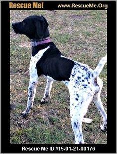 FLORIDA POINTER RESCUE - New Smyrna Beach, FL Rescue Animals Archer ...