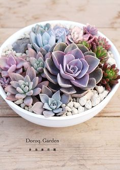 Succulents for garden decoration Cactus arrangements Cactus y Suculentas Types Of Succulents, Succulents In Containers, Cacti And Succulents, Planting Succulents, Planting Flowers, Flower Containers, Container Plants, Container Gardening, Air Plants