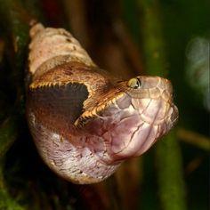 Cobra ou borboleta? Fotógrafo registra em imagens casulo curioso