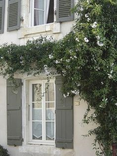 beautiful cottage exterior with grey shutters and white flowering vine