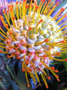 Weird Cool FLower Unusual Flowers, All Flowers, Amazing Flowers, My Flower, Pretty Flowers, Flower Power, Weird Plants, Unusual Plants, Blooming Flowers