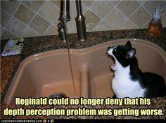 Poor kitteh.