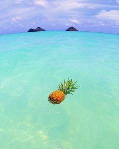 summer sun, summer of love, summer beach, Pineapple Wallpaper, Pineapple Art, Pineapple Pictures, Baby Pineapple, Summer Pictures, Pretty Pictures, Holiday Pictures, New Beginning Symbol, Cute Wallpapers