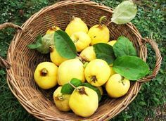 Aromatic, mystique, quince fruit is revered since ages as the golden apple in the epics. Those who taste dulce de membrillo (quince paste) would wonderfully appreciate its pleasant, aromatic flavor. Fruit Nutrition Facts, Diet And Nutrition, Quince Fruit, Fiber Rich Foods, In Season Produce, Fresh Vegetables, Veggies, Balanced Diet, Best Diets