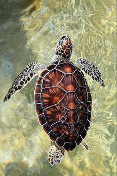A Turtle in Translucent Waters.
