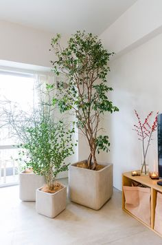Indoor Vertical Gardening Tips and Ideas Organic gardening isn't always about food to eat. Some people enjoy growing flowers and other forms of plant life as well. Indoor Trees, Indoor Plants, Plantas Indoor, Balcony Flowers, Office Plants, Plant Shelves, Green Rooms, Foliage Plants, Garden Planning