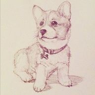 Quick sketch. #drawing #illustration #sketch #cute #puppy #corgi - @khuon | Webstagram