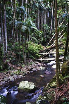 Road Trip Stop - The Hinterland on NSW North Coast
