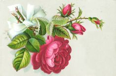 Free Vintage victorian rose notecard graphic via the avalon rose