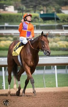 Beholder Horse Racing, Race Horses, Thoroughbred, Preakness Winner, Riding Helmets, Dancer, Animals, Animales, Animaux