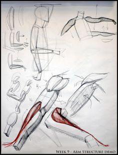 Analytic Figure Drawing