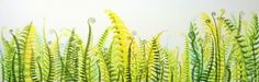 'Ferns' signed limited edition giclee print Peta, Ferns, Cactus Plants, Giclee Print, Prints, Cacti, Fern, Cactus, Printmaking