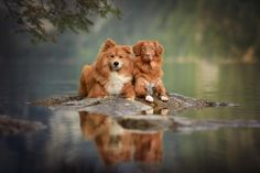 woman creates enchanting portraits of dogs in the austrian wilderness 27