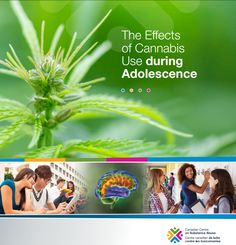 Adolescence, Drugs, Pdf, Canadian Horse, Wrestling