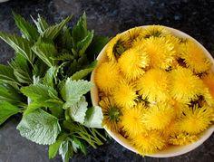 Pampeliško-kopřivový sirup s meduňkou   Ze zahrady do kuchyně