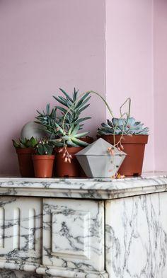 The Socialite Family - Plantes sur la cheminée - #deco #plants #fireplace…