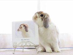 I'm fabulous! Worthy to be the subject of a gorgeous painting! #rabbit #rabbits #rabbitlove #rabbitlife #rabbitofinstagram #rabbitsworldwide #bunny #bunnylove #bunnystagram #bunnylovers #bunnyrabbit #bunnygram #bunnylife #pet #pets #cute