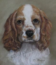 Dogs Cocker Spaniel Dog Art by Della Burgus -- Art Helping Animals
