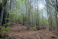 Forest from Montseny | Land of Photos