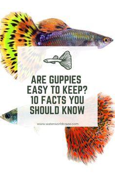 5 Gallon Aquarium, 10 Gallon Fish Tank, Aquarium Fish Tank, Fish Aquariums, Guppy, Best Aquarium Filter, Pet Supermarket, Native American Animals, Image Of Fish