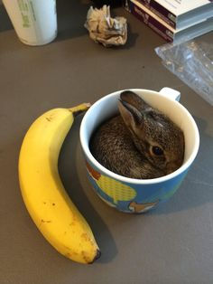 Bunny in a cup. That is all.