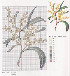 Australian Wildflowers • 13/19 Golden Wattle