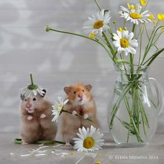 Photo floral artists by Elena Eremina on – Animals Felt Animals, Animals And Pets, Baby Animals, Cute Animals, Maus Illustration, Happy Birthday Wishes Cards, Happy Photos, Cute Hamsters, Cute Corgi