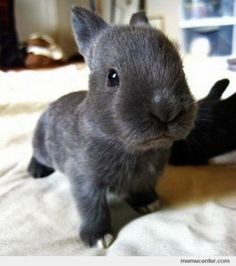 Okay, so I seriously want this; and I want it to stay exactly that size. So adorable!