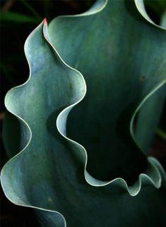 Tulip Arabesque by Laura Berman