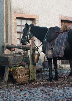 Donas, Jamie's horse.