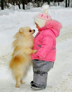 This. THIS. THE CUTENESS. Pomeranians are the best.
