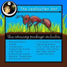 The Leafcutter Ant - Parts of the Ant and Lifecycle of the Ant Queen Ant, Booklet Template, Sequencing Cards, Next Generation Science Standards, Interactive Learning, Name Cards, Life Cycles, Ants, Teaching Resources