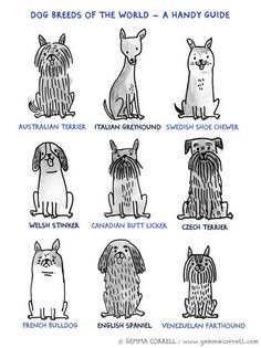 Gemma Correll. dog breeds of the world-a handy guide. illustration. cute. funny. italian greyhound. terrier. spaniel. french bulldog. mutts.