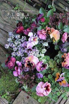 パンジーリース寄せ植え。。。ペルシアンサプライズを使って。 の画像|フローラのガーデニング・園芸作業日記