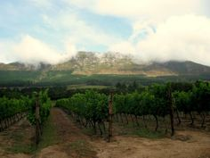 Clouds hugging the Constantia Valley vineyards, Cape Town - South Africa | Traveldudes.org