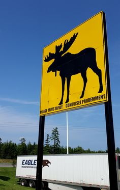 When the caution sign is this Big, you better beware! Moose Art, Eagle, Canada, Signs, Animals, Animales, Animaux, Shop Signs, Animal