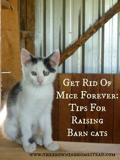 How to Raise Barn Cats That Actually Control Your Mice Population. Not sure I'd go this far, but props to everyone who does. It seems worthwhile.