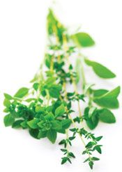 Cooking with culinary herbs: Find out which herbs offer the most health benefits in the kitchen!