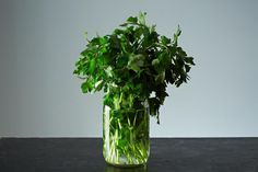 A lesson on keeping your fresh herbs fresh. on Food52