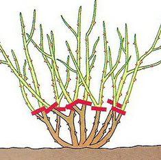 Choppy Hair, Home And Garden, Flowers, Calzone, Gardening, Garden, Roses, Crete, Lawn And Garden