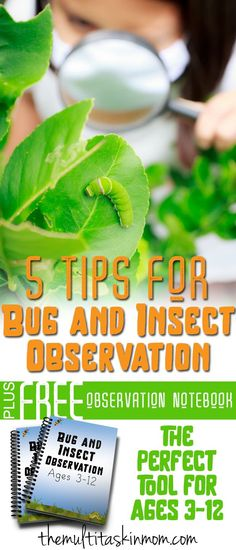5 tips for Bug and Insect Observation Plus a Freebie