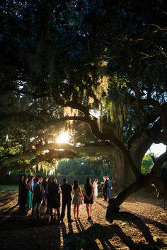 New Orleans wedding at Audubon Park Tree of Life