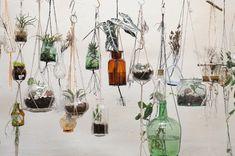 what if hanging glass herb garden Air Plants, Garden Plants, Indoor Plants, Small Plants, Herb Garden, Garden Art, Diy Hanging, Hanging Planters, Hanging Terrarium